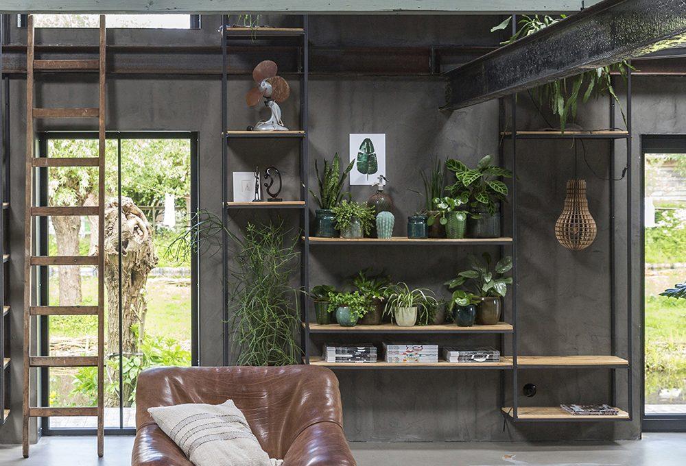 Quali piante sono adatte alla libreria