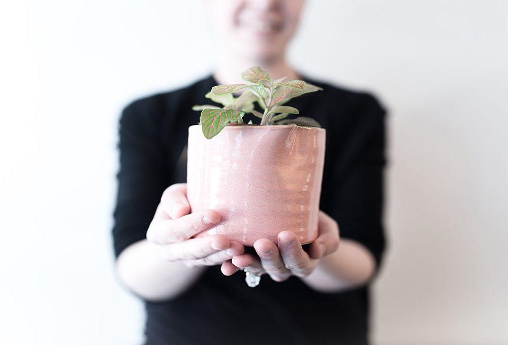 6 consigli per aiutare le piante a superare la stagione fredda