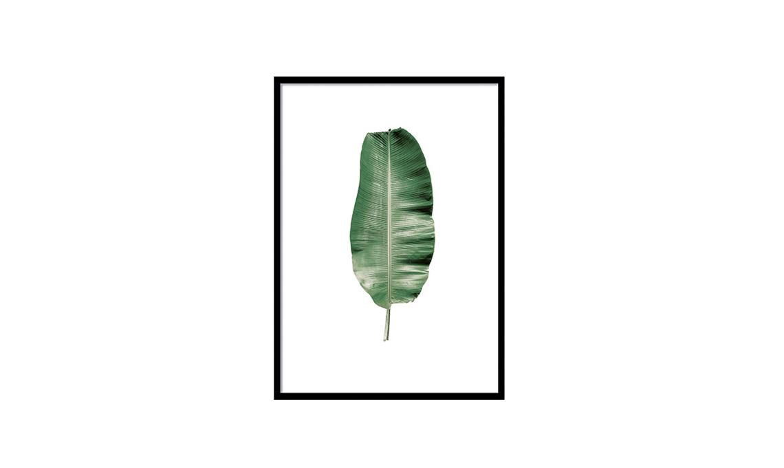 stampa botanica desenio