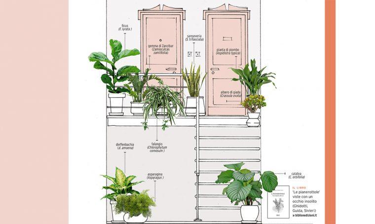 Le piante adatte al pianerottolo