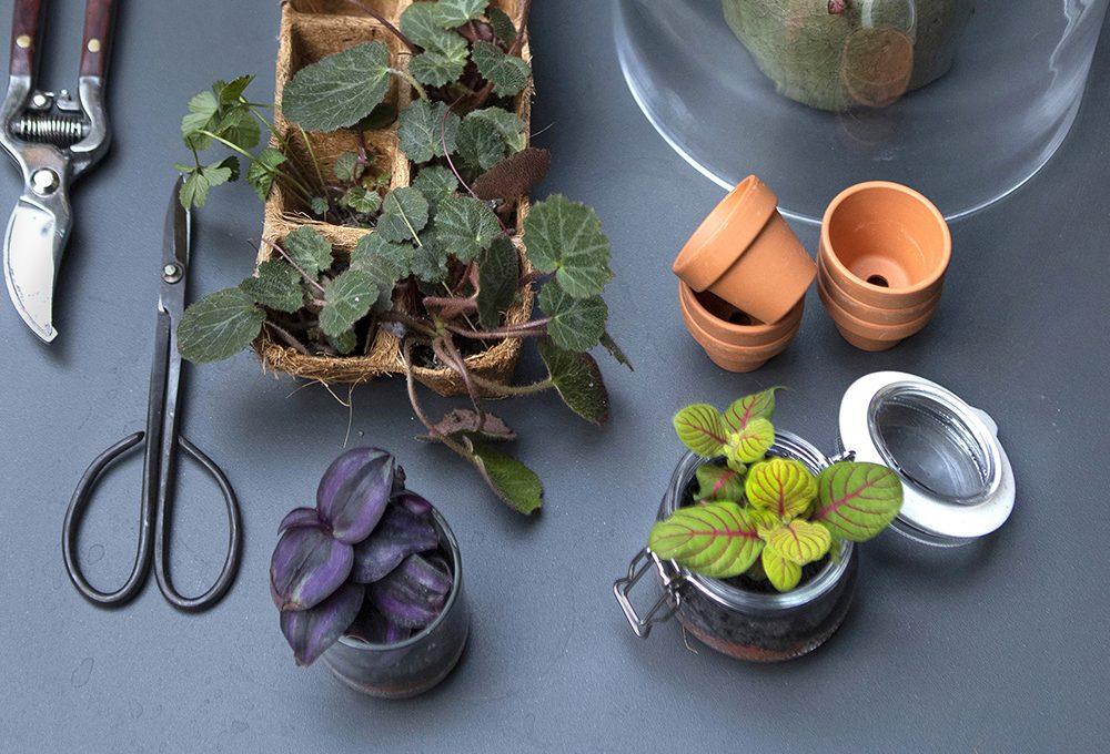 Come scegliere i vasi per le piante