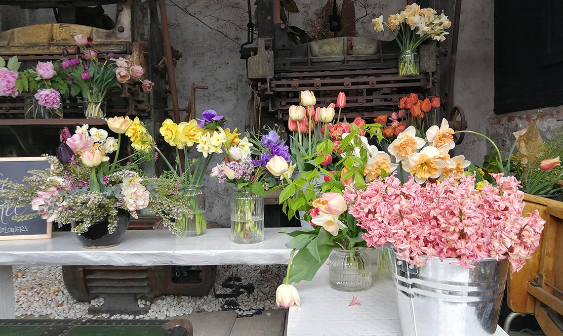 Olga's Flower Farm