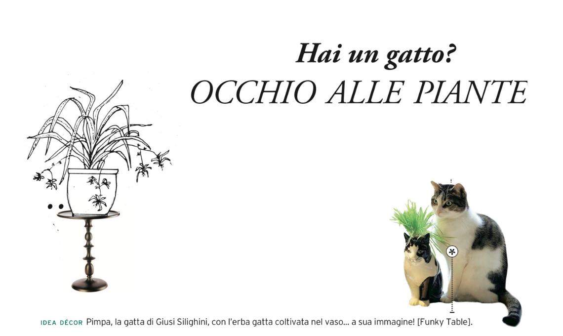 Stella Di Natale Gatti.Le Piante Giuste Da Coltivare Se Hai Un Gatto Casafacile