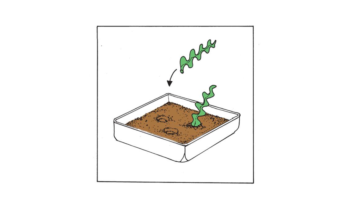 cactus zig zag