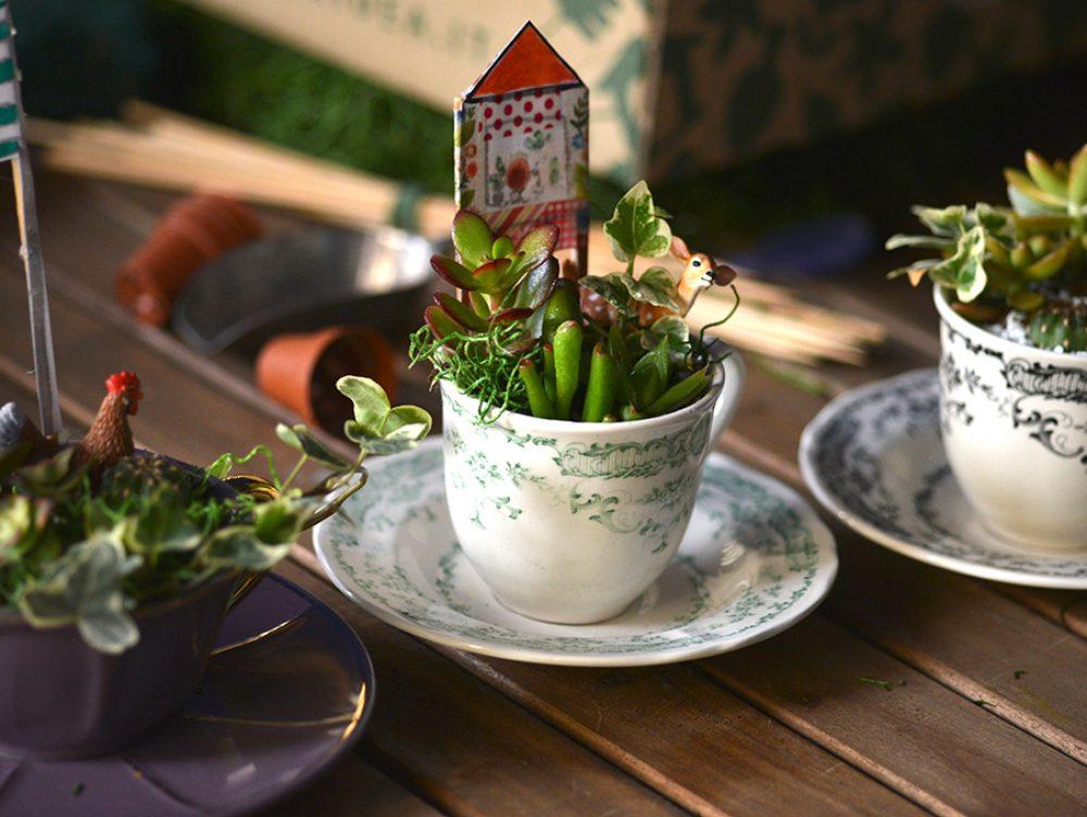 Come realizzare un mini terrario in una tazza