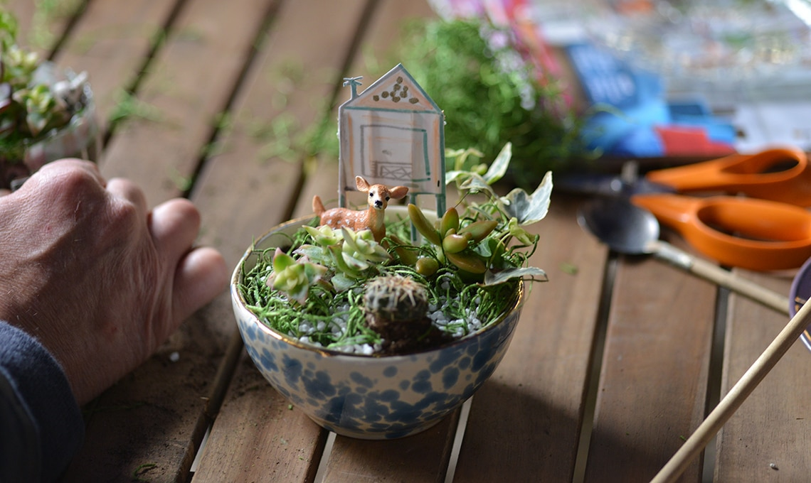 Micro-mondi in tazza