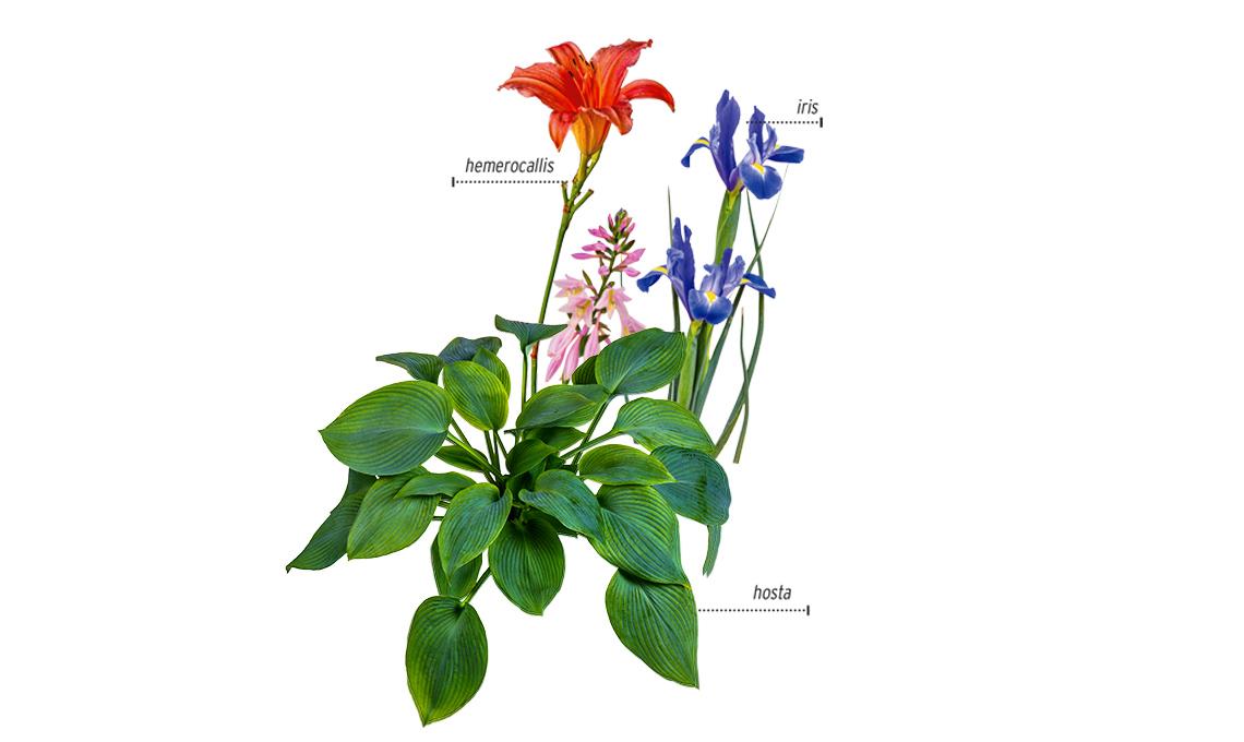 piante che stanno bene insieme