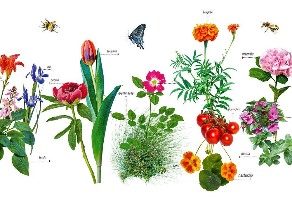 Giardinaggio: le piante che stanno bene insieme