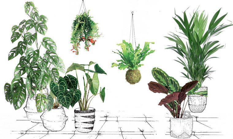 Come coltivare le piante tropicali