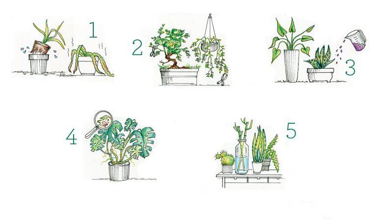 Lavori di stagione per le piante da interno