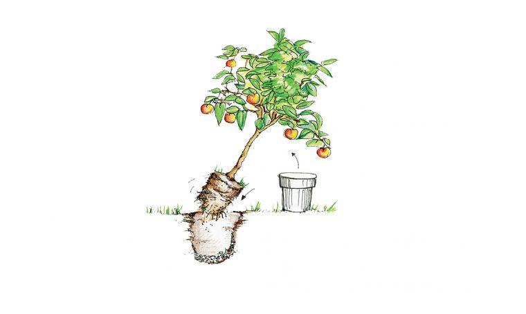 Lavori di stagione nell'orto e in giardino