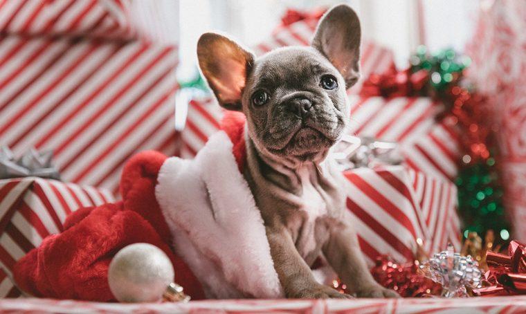 Natale 2019: regali originali