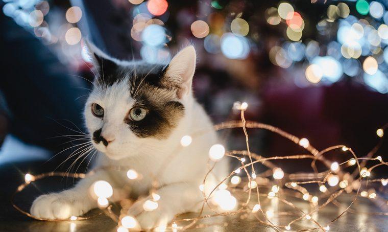Come illuminare le feste senza sprechi
