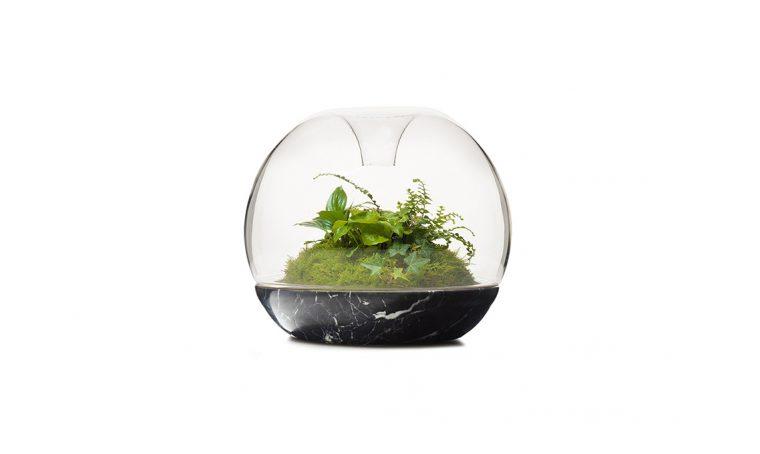 Mossarium: un cuscino di muschio sotto vetro