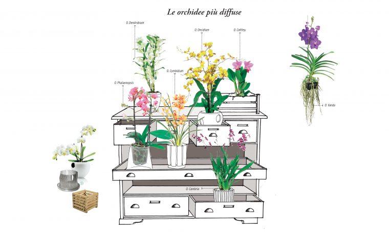 Orchidee: ecco come coltivarle per farle rifiorire