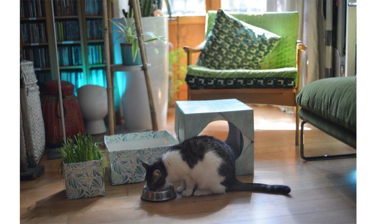 Il multipack ecosostenibile diventa cuccia di design per il tuo gatto