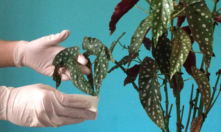 Come lucidare le foglie delle piante