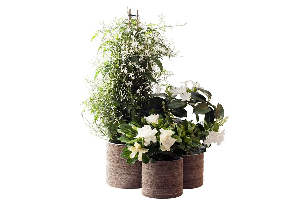 Primavera: riempi la tua casa di fiori bianchi e fragranti