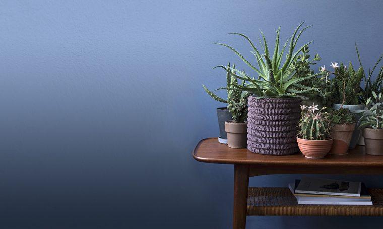 Aloe: la scelta giusta per pollici poco verdi