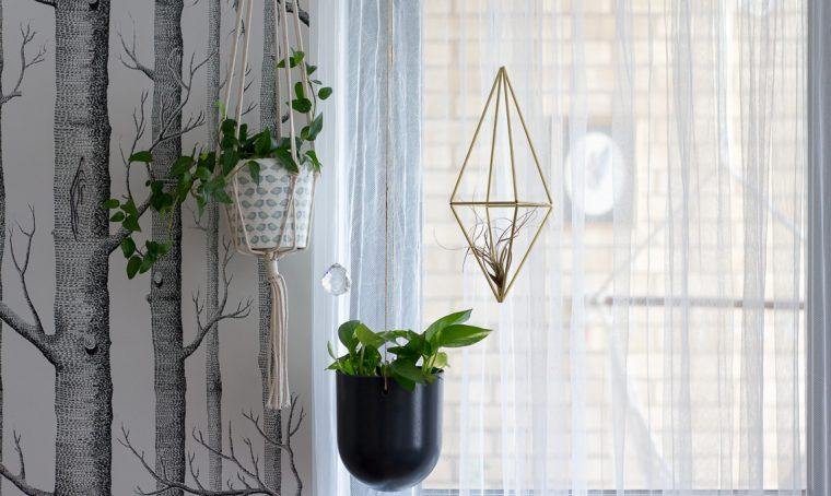 Decorare le finestre con piante e talee
