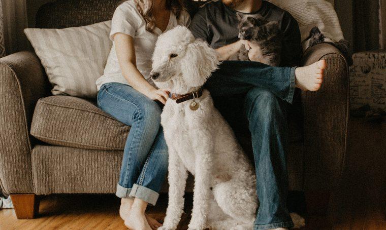 Animali in casa: la tua task force per le pulizie