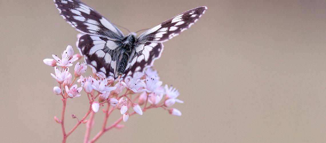 Come creare un butterfly garden