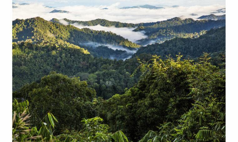 Velux e WWF insieme per la salvaguardia ambientale