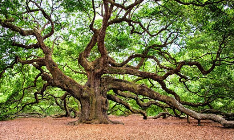 Le regole per abbattere un albero… ma solo se necessario!