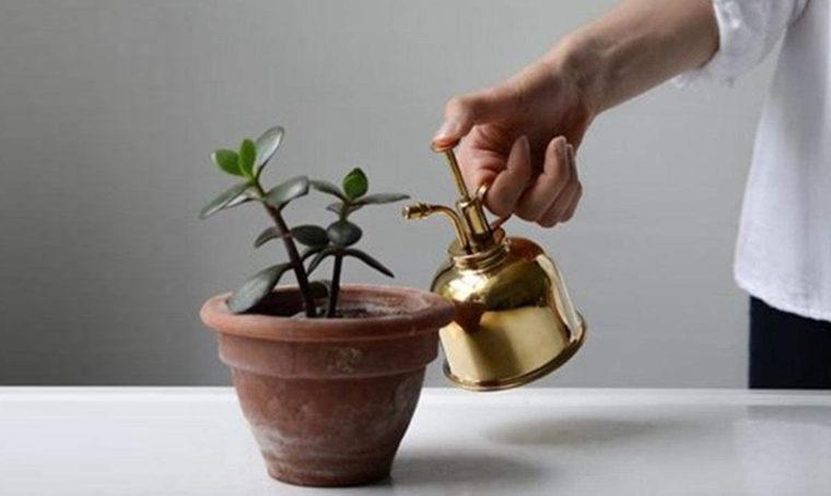 Come nebulizzare le piante da interno