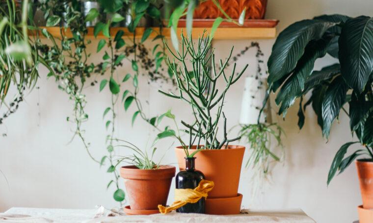 Come procedere per rinvasare le piante