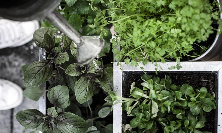 Come creare un mini-orto sul balcone