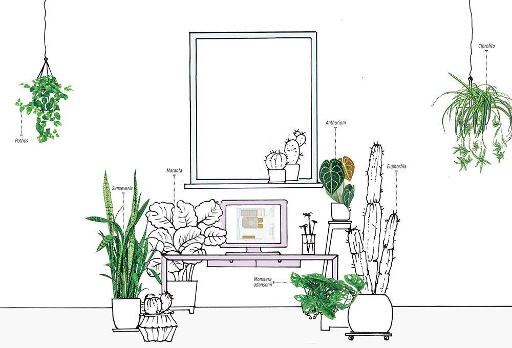 Le piante giuste per creare un angolo (home) office salutare e piacevole