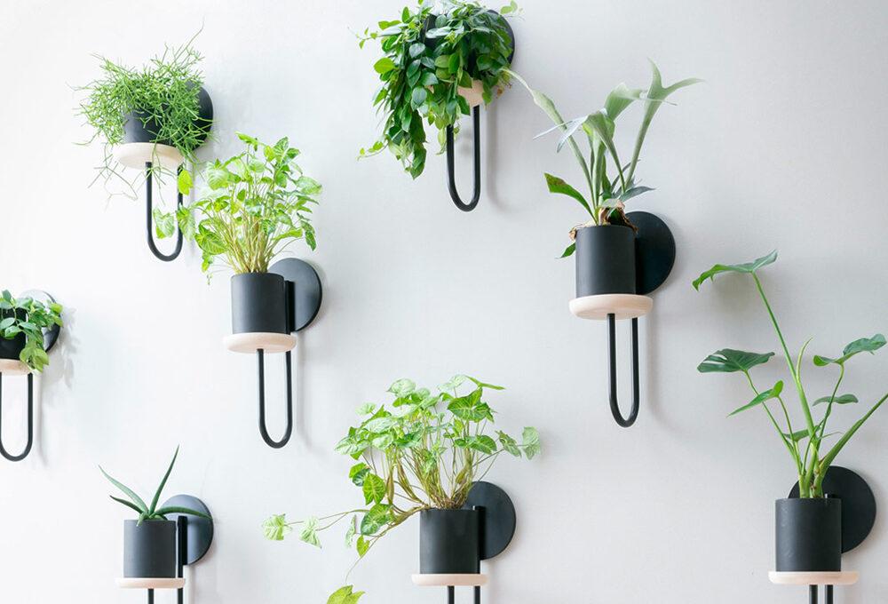 8 portavasi con cui rifare il look alle piante di casa