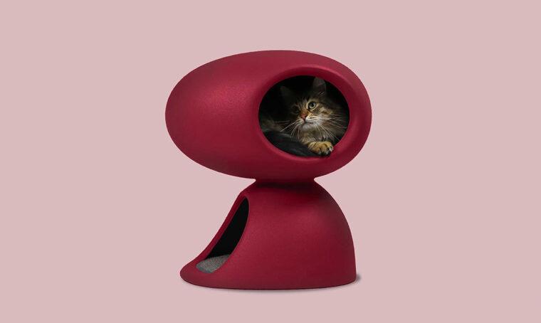Arredi, giochi e golosità per coccolare il tuo gatto