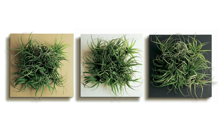 Purificare gli ambienti con l'aiuto delle piante