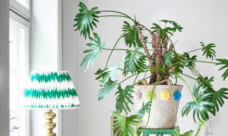 Una pianta da riscoprire: il Philodendron