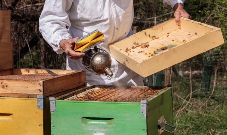 Dyson porta duecentomila api nel cuore di Milano