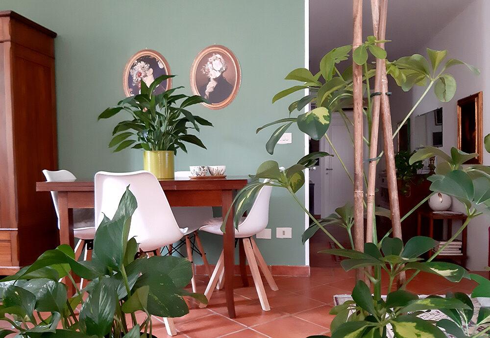 Dalla passione per le piante a una 'foresta' domestica