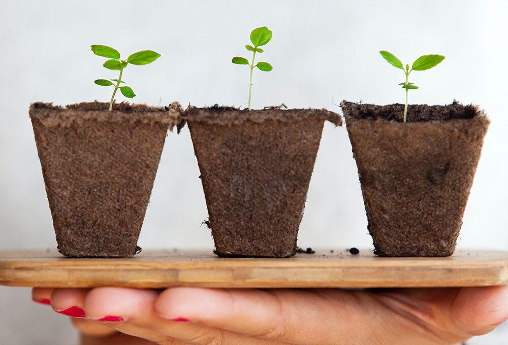 È ora di rinvasare? te lo dicono le piante!